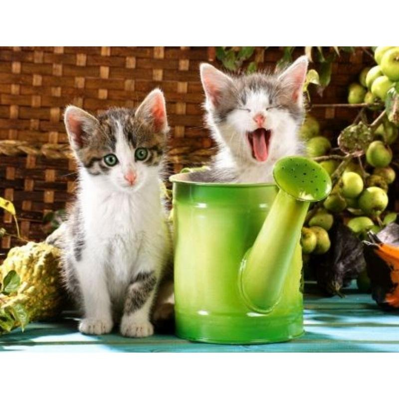 Палитра Холст с крас 40х50 Сонные котята